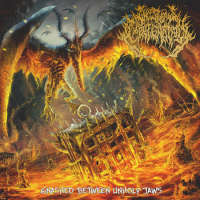Incestuous Impregnation (Chn/USA) - Gnashed Between Unholy Jaws - CD